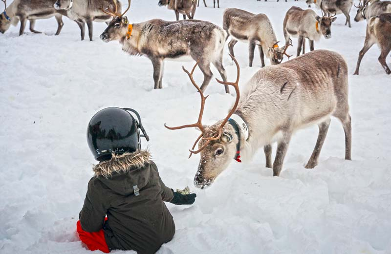 Snowmobile safari to a reindeer farm