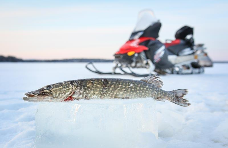 Ice Fishing trip by snowmobile sledge